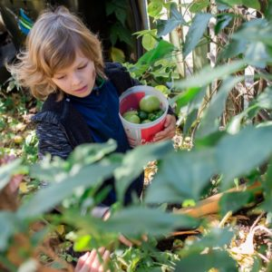 A child picks tomatoes in a sunny garden