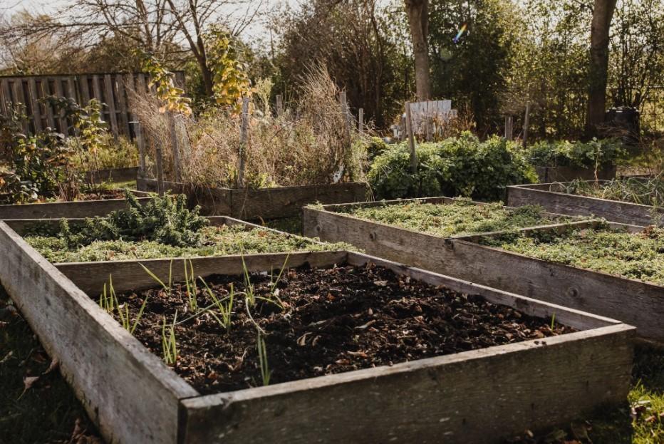 Raised garden beds in the sun